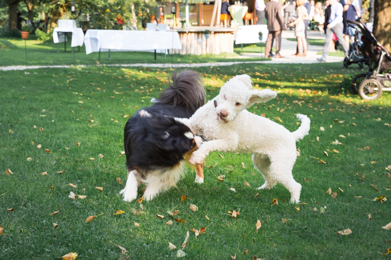 Auch die Hunde genießen das schöne Wetter und toben bei der Sommerhochzeit am AmVieh-Theater - Hochzeitsfotos